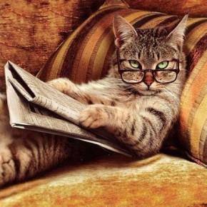 gatto-legge-giornale-290x290